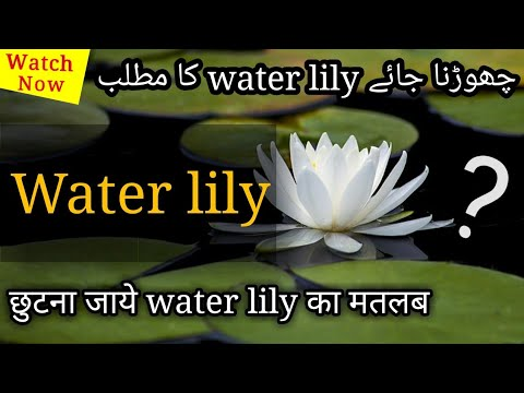 Water Lily Meaning In Hindi Urdu