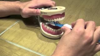 الطريقة الصحيحة لتنظيف الأسنان