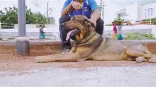 A short video on India's first dog park set up at Kondapur, Hyderabad