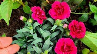 Respondendo Perguntas Sobre Jardinagem