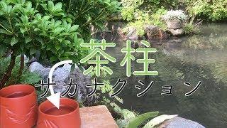 茶柱/サカナクション Full ver. cover&make
