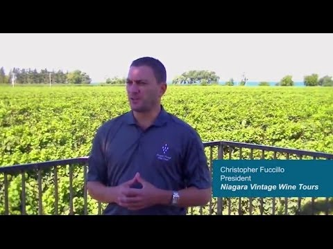Niagara Vintage Wine Tours Reviews Wisdek - Toronto Online Marketing Company