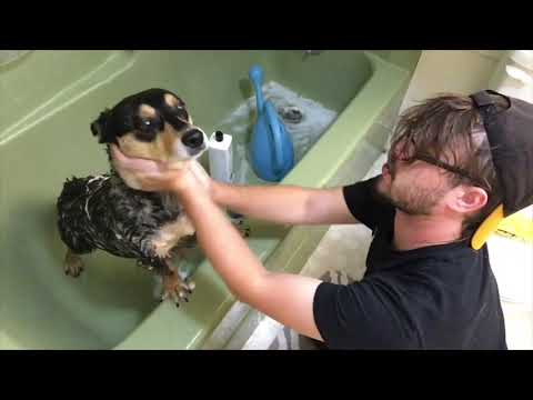 How To Properly Water Your Dog and Other Ways To Annoy Your Pets