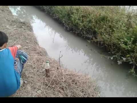 Mop3 hướng dẫn cách câu ếch đơn giãn