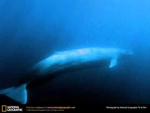 Blue Whale Song - YouTube