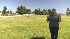 Sound Horsekeeping: Pasture Management