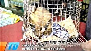Cámara oculta: tráfico ilegal de animales silvestres y exóticos  - 25/05/2016