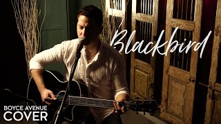 Blackbird - The Beatles (Boyce Avenue acoustic cover) on Spotify & Apple thumbnail