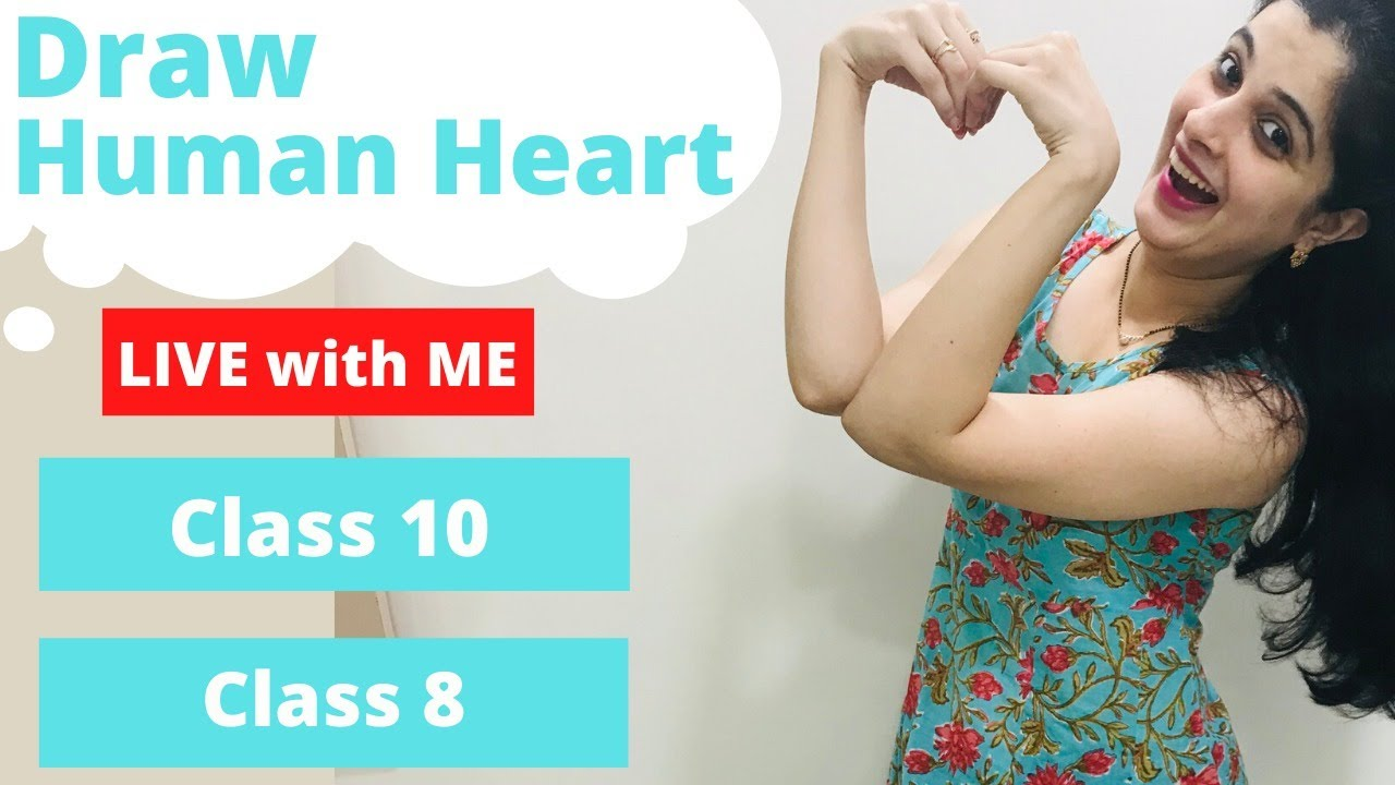 Draw Live - Heart Diagram The Circulatory System Chapter 8 ...