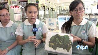香港中学生养的蚕和神州十一号一起到太空去啦