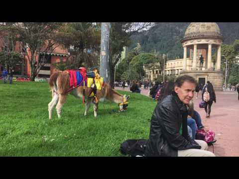 Bogota Colombia Llama in the square Mar 2017  IMG 1158