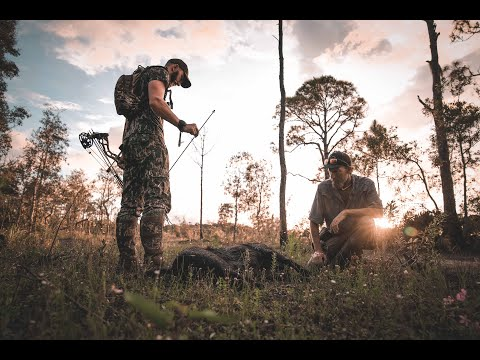 Hog Hunting In Florida With Alligator Alley Outfitters