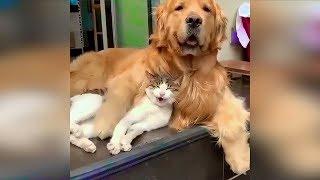 Смешные кошки Май 2019 Новые приколы с котами, сме...