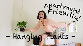 Hanging Plants DIY // Apartment & Rental Friendly!