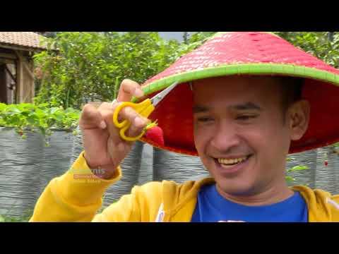 BROWNIS - Main Bareng Rusa Lucu Dan Kulineran Olahan Strawberry (26/1/19) Part 3