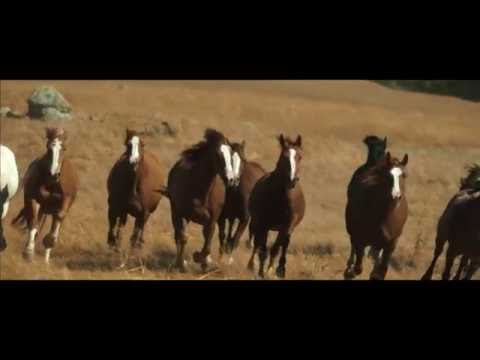 Feature Film Full online The Dog Lover Rodeo Sports Promotions EP 31