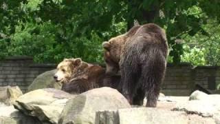 Медведи, весна пришла, кайфуем!