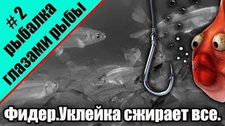 Рыбалка глазами рыбы.Подводная съемка.Фидер.Уклейка сжирает все!