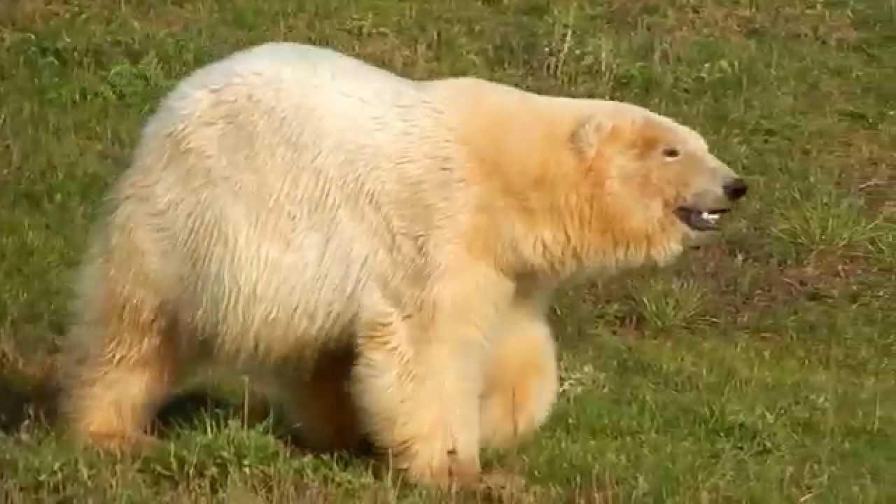 Wildlife Rescue & Rehabilitation, Inc. - YouTube