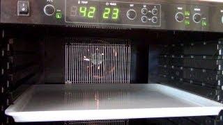 Dörrautomat Stromverbrauch - Sedona Dörrgerät (Vegane Rohkost)