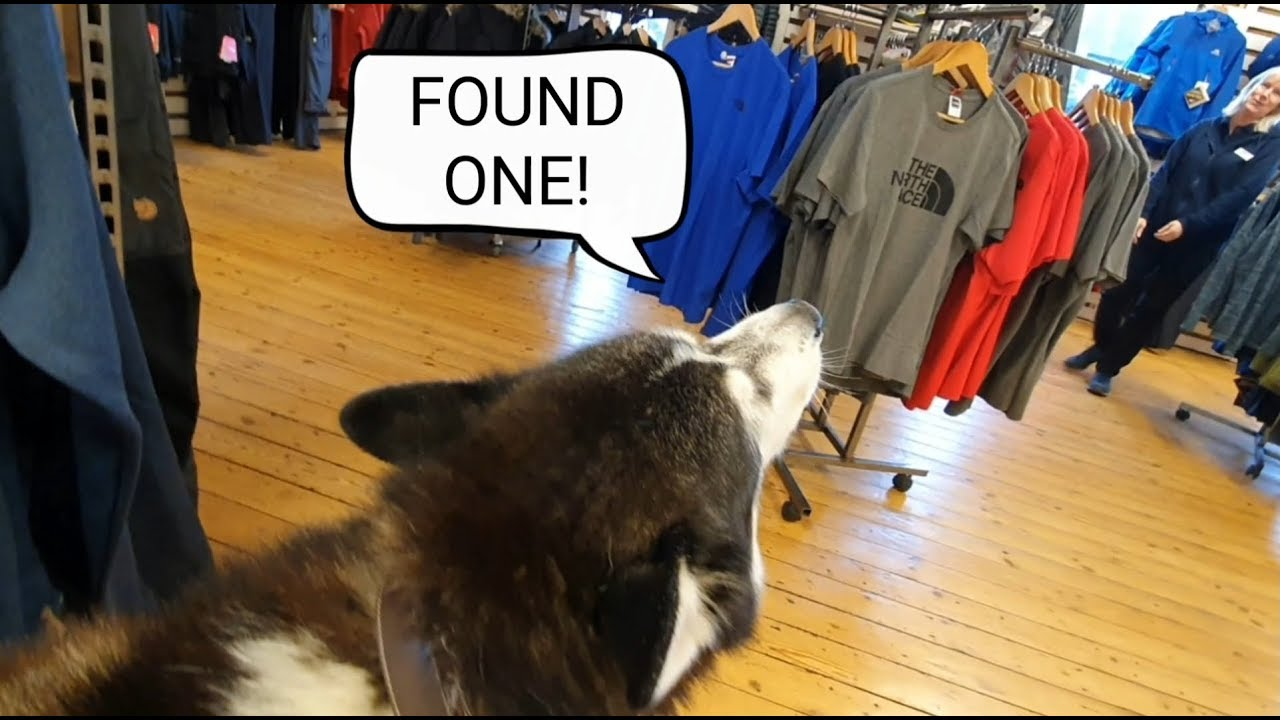 Dog goes shopping in search of people to love | Making people Smile| Funny animals