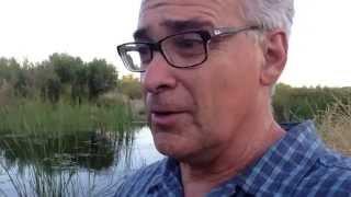 Freshwater Marsh Biome