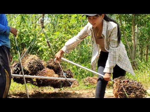 Gaji Pekerja Sawit Di Kalimantan || PETANI SAWIT MANDIRI