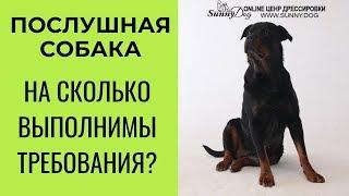 Послушная собака. На сколько выполнимы требования?