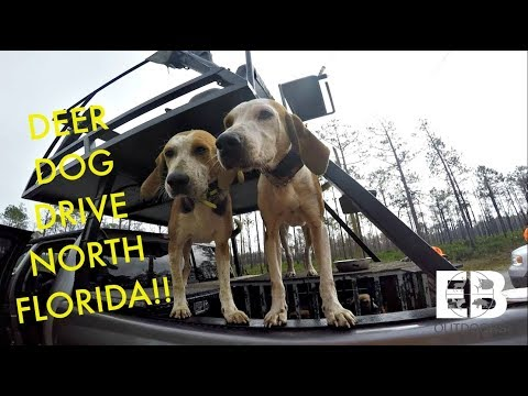 Deer Hunting With Dogs (North Florida)