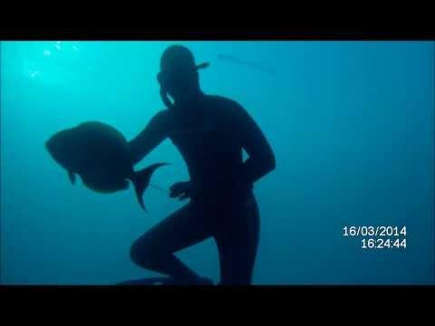 Spearfishing Rangiroa