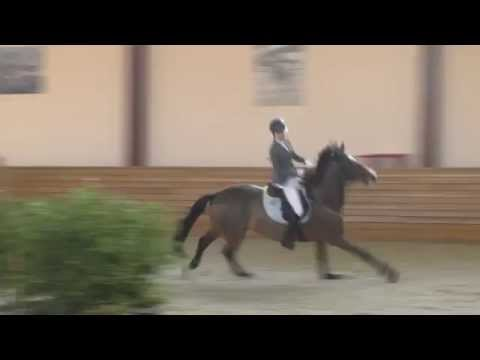 cba6512fe Horse Knocks off Rider and Finishes Competition Alone - YouTube