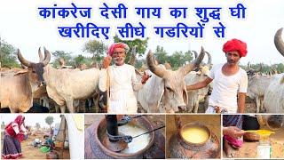 कांकरेज देसी गाय का शुद्ध घी सस्ते रेट में आप तक पहुंचाते हैं ये गड़रिये Desi cow, Desi ghee