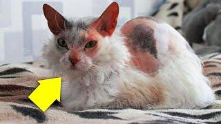 Bir Kedi Yavrusu Sahiplendiklerini Düşünüyorlardı Şaşırtıcı Gerçeği Çok Sonra Farkettiler