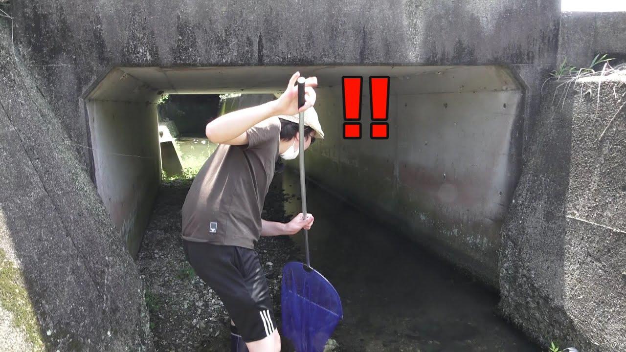 水槽に異変が・・・ 橋の下にブリブリのアイツが潜んでいました!