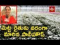 Chamanthi Flower Cultivation in Polyhouse | hmtv Agri
