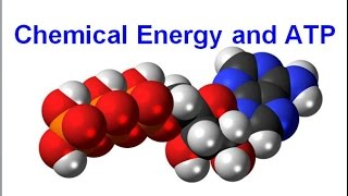 Chemical Energy and ATP (regular biology) updated