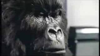 Cadbury Gorilla (Phil Collins - In the Air Tonight)
