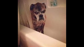 Animals Bathing - Funny Reaction of Different Animals Bathing Compilation