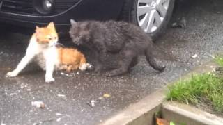Коты прикольно