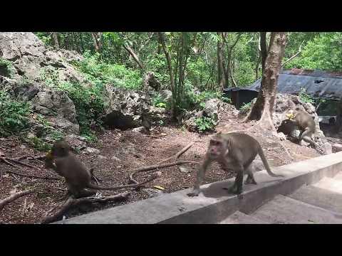Happy With Monkey Meeting Beautiful girl - Funny Monkeys Group With Girl