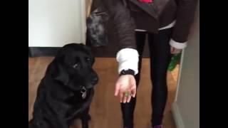 ペットショップ勤務の犬、お客さんの手を甘噛み導いていった先は・・・
