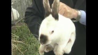 Породы кроликов. Урожайные грядки.