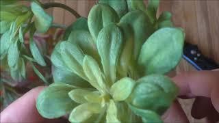 Посылка с Aliexpress.Искусственные растения.