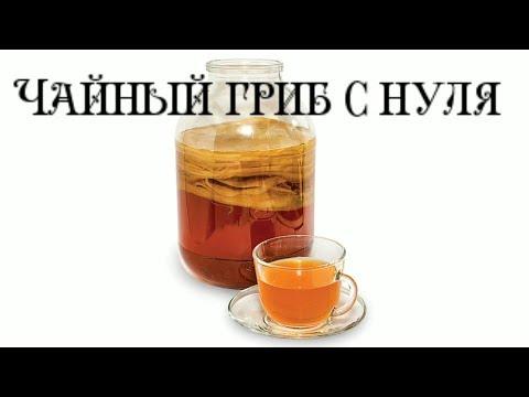 Вопрос: Как приготовить чайный гриб?
