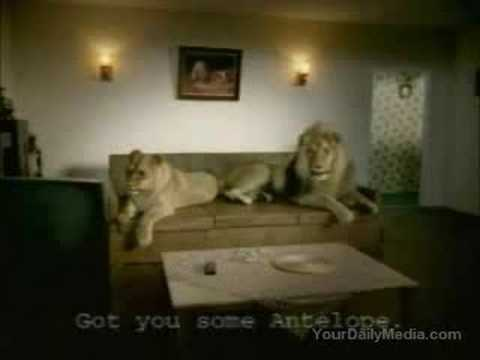 Tripoli Funniest Video's - Lion Real Life
