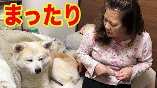 grandchild and #GermanShepherd #AkitaInu #シェパード犬 祭日の東京・...