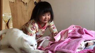 5月の早朝、何やら話声で目を覚ますと、ヒメちゃんが猫さん達と御ままごとをしていました。「ミルクちゃん、勘吉さん」の続編です。 ※猫さん...