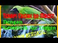 Terapi Burung Cucak Ijo Dengan Gemercik Air Terjun Ngobra(.mp3 .mp4) Mp3 - Mp4 Download
