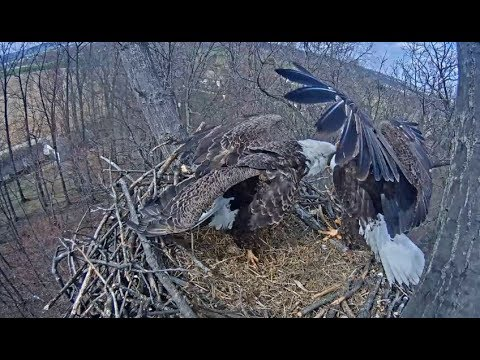 Hanover PA Eagle Cam ~ Lucy Is Back ~ Freedom Not Welcoming 4.8.18
