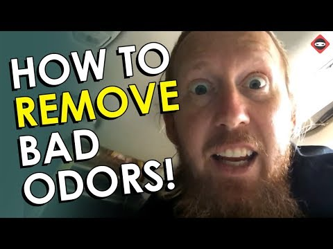 How to Remove Mold Smell From Anything - The Magic Formula